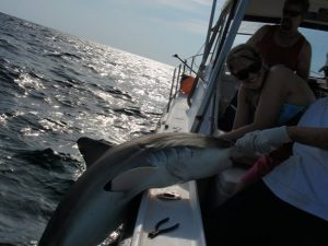 Pulling a shark onboard