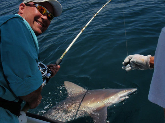 Shark Catch and Release Photo