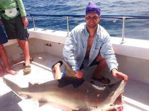 florida fish species shark catch
